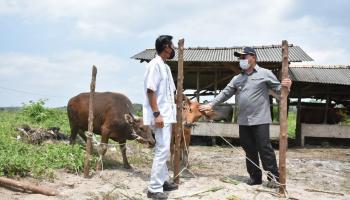 Gubernur Berharap Program Penggemukan Sapi Air Jangkang Diaplikasikan di Tempat Lain