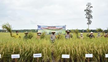 Panen Padi di Parit 2, Gubernur Kenalkan Teknologi Drone ke Para Petani